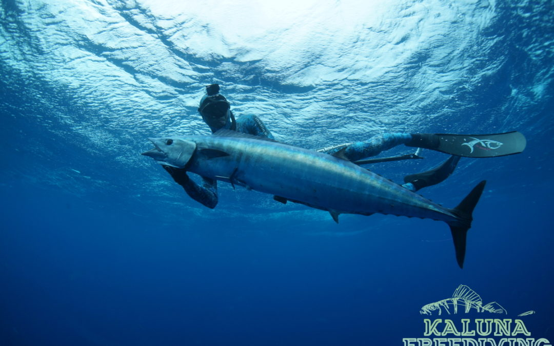 Cape Verde – Spearfishing – August Trip 2